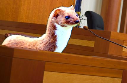weasel court